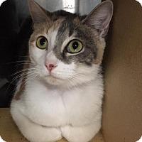 Adopt A Pet :: Sally - Boynton Beach, FL