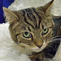 Adopt A Pet :: Reede - Morgantown, WV