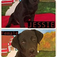 Adopt A Pet :: Jessie meet me 4/21 - East Hartford, CT