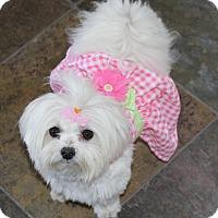 Adopt A Pet :: Elsa - Covina, CA