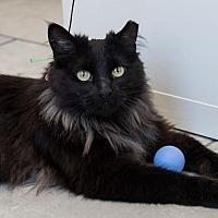 Adopt A Pet :: Elvira - St. Paul, MN