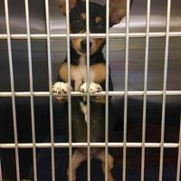 Adopt A Pet :: Ursula - Alpharetta, GA