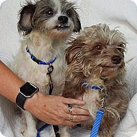 "Adopt A Pet :: Opie & Andy ""Lil' Sweeties!"" - SUSSEX, NJ"