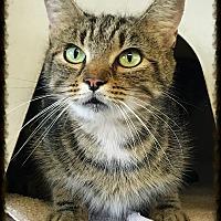 Adopt A Pet :: Lorelei - Los Alamitos, CA