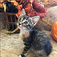 Adopt A Pet :: Tulip - Orange, CA