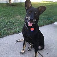 Adopt A Pet :: Sebastian - Maple Grove, MN