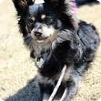 Adopt A Pet :: Riley - justin, TX