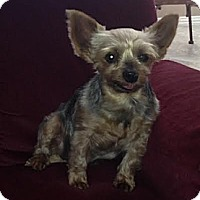 Adopt A Pet :: Mattie - Yakima, WA