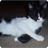 Adopt A Pet :: Rowan - Davis, CA