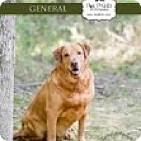 Adopt A Pet :: General - Lewisville, IN
