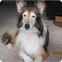 Adopt A Pet :: Lilly - apache junction, AZ