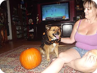 Keeshond/Spitz (Unknown Type, Medium) Mix Dog for adoption in Chiefland, Florida - Titan-PAD (pick adoption fee)