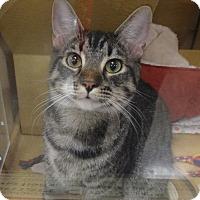Adopt A Pet :: TOBY - Diamond Bar, CA