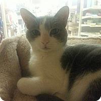 Adopt A Pet :: Sarah - West Dundee, IL