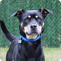 Adopt A Pet :: Lady - Port Washington, NY
