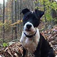 Adopt A Pet :: Lightnin' Hopkins - New York, NY