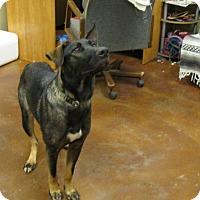 Adopt A Pet :: Henrene - South Dennis, MA