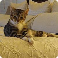 Adopt A Pet :: Sadie - Sarasota, FL