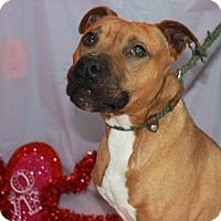Adopt A Pet :: Dexter - Erwin, TN