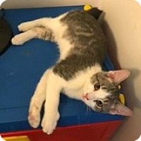 Adopt A Pet :: Timmy - McHenry, IL
