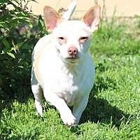 Adopt A Pet :: Saulie - Mount Gretna, PA