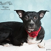 Cattle Dog Mix Dog for adoption in Chandler, Arizona - Fiona