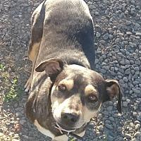 Adopt A Pet :: Rex - Woodland, CA