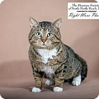 Adopt A Pet :: Charlie - North Myrtle Beach, SC