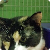 Adopt A Pet :: Reese - Bloomingdale, NJ