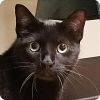 Adopt A Pet :: Oompa Loompa - Sheboygan, WI