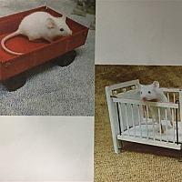 Adopt A Pet :: Calamondins - Madison, NJ