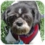 Photo 3 - Shih Tzu Mix Dog for adoption in Los Angeles, California - Domino