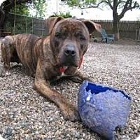 Adopt A Pet :: Roman - Providence, RI