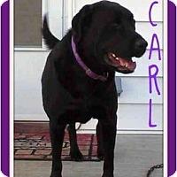 Adopt A Pet :: Carl - Dallas, PA