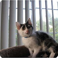 Adopt A Pet :: Ivan - Catasauqua, PA