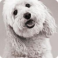 Adopt A Pet :: Pepper - North Palm Beach, FL