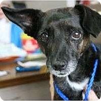 Adopt A Pet :: Molly - Canoga Park, CA