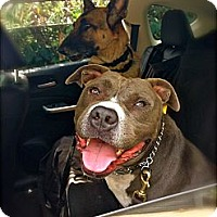 Adopt A Pet :: Elron - Los Angeles, CA