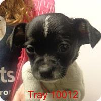 Adopt A Pet :: Trey - Greencastle, NC