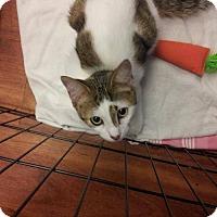 Adopt A Pet :: Hickory - Hamilton, ON