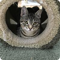 Adopt A Pet :: Glenda - Speonk, NY