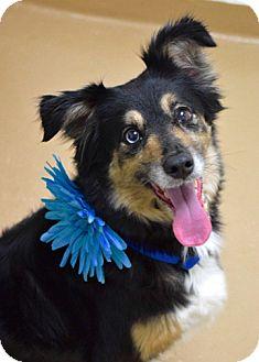 Border Collie Mix Dog for adoption in Dublin, California - Kita