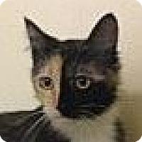 Adopt A Pet :: Athena - Winchester, CA