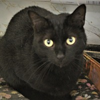 Adopt A Pet :: Thyme - Richand, NY