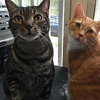 Adopt A Pet :: Jynx - Columbia, SC