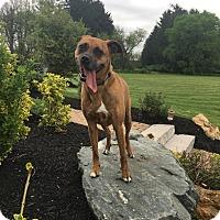 Adopt A Pet :: Erin - Sinking Spring, PA