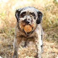 Adopt A Pet :: Heidi - Auburn, CA