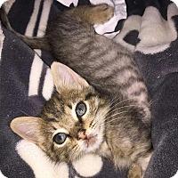 Adopt A Pet :: Frappé - Hammond, LA