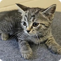 Adopt A Pet :: #269 Oliza YOUNG FEMALE - EUTH ALERT! - Morehead, KY