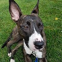 Adopt A Pet :: Reesie - Villa Park, IL